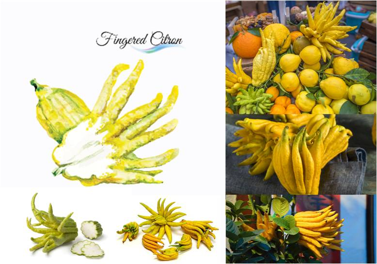 Amazing Fingered Citron or Buddha's Hand