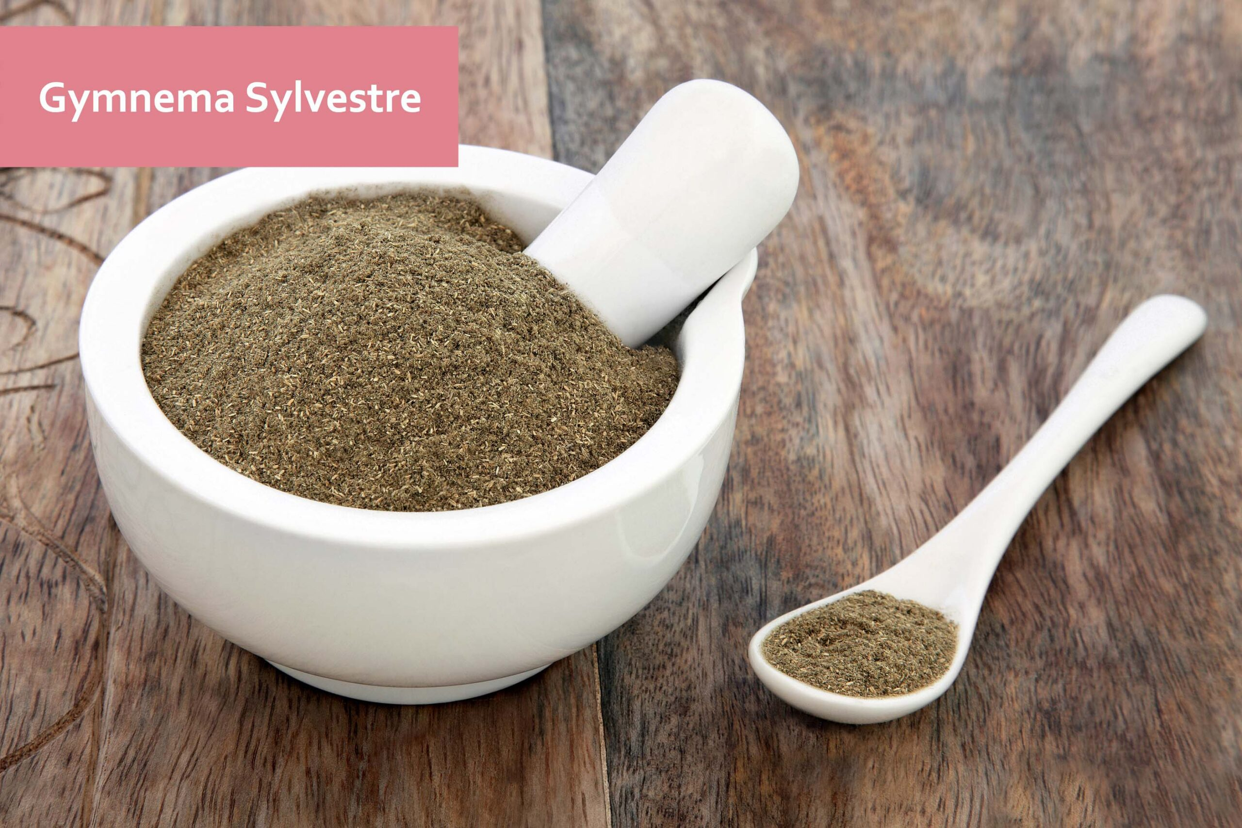Gymnema sylvestre herb used in natural alternative medicine over